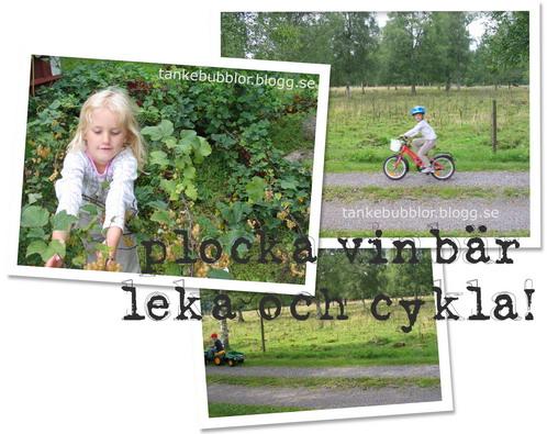 vinbär och cykla