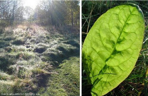 solsken och grönt blad