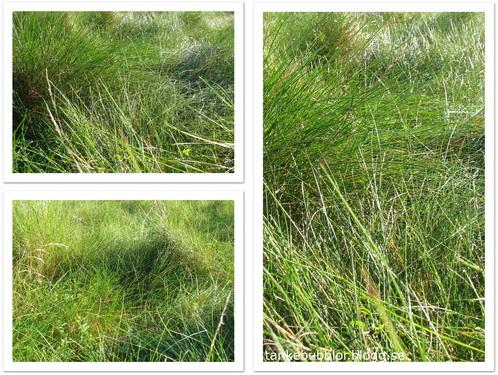 mjukt gräs