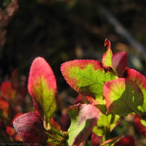 röd-gröna blad