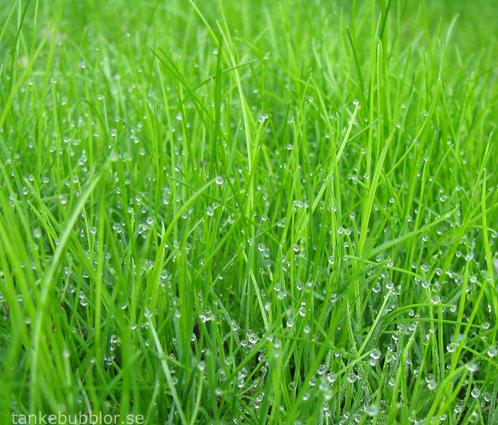 nysått gräs