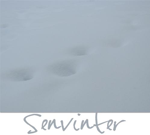 Senvinter