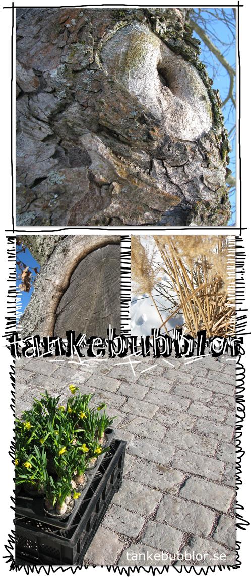 träd bark vass grenar torghandel påskliljor