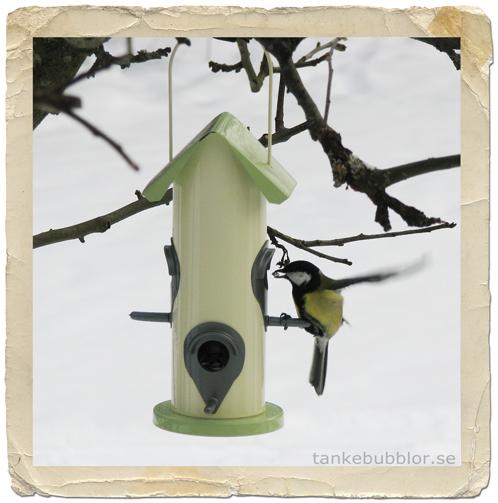 fågelfrön