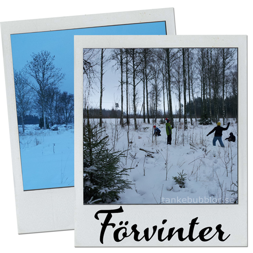 förvinter