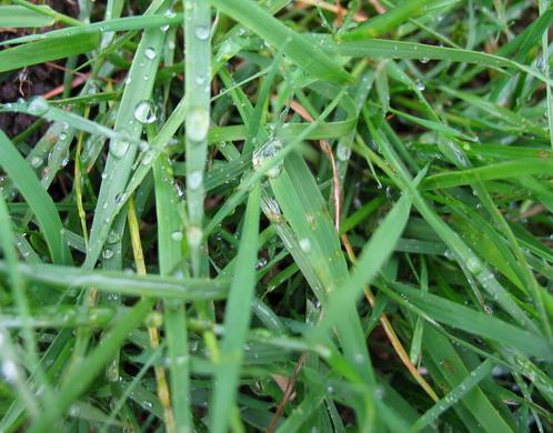 regnigt gräs