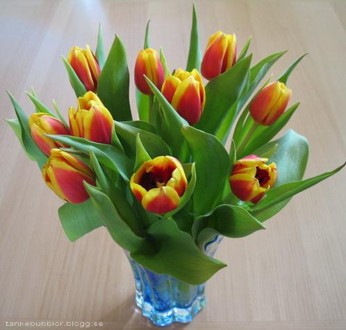 gul-röda tulpaner