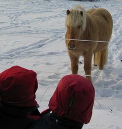 barnen tittar på hästar