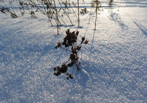 snö i solsken