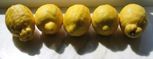 fem citroner i rad