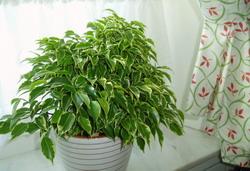Grön växt2